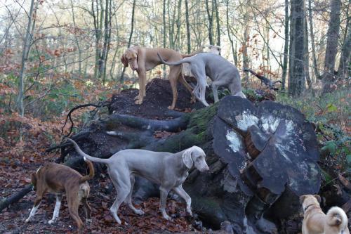 Jachthonden